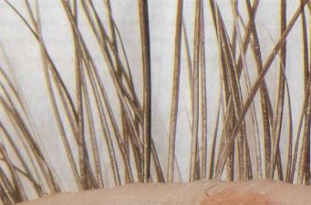 Крепление искусственной ресницы под натуральную (снизу)