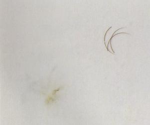 ресницы из норки спустя 15 минут в растворителе